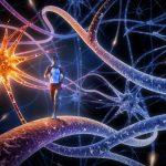 Entenda O Seu Sistema Nervoso